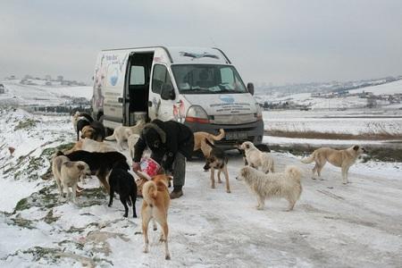Sokak hayvanlarına yemek dağıtıldı...  Haberi